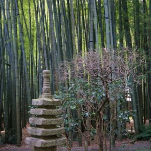 竹の寺でお抹茶と紅葉狩り