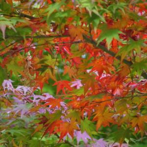 八幡様の紅葉