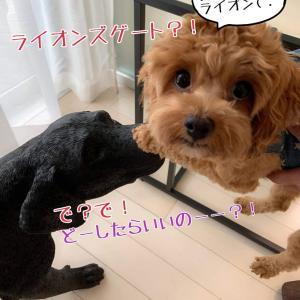 ◆ライオンズゲート・・・で?で!どーしたらいいのっ!!