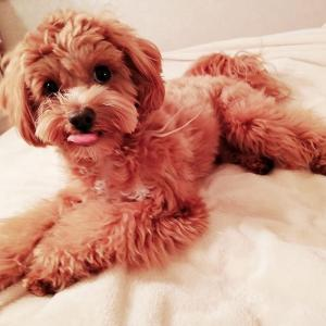 ◆アロマ犬成長記♡「はじめの一歩②」~ディートフリーのアウトドアディフェンスで安心安全♪