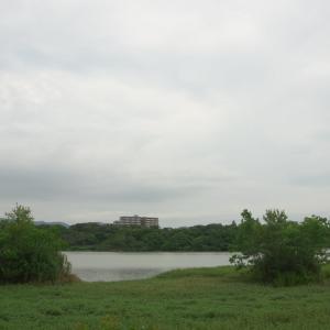 朝からカモの人(昆陽池公園・2020.7.24) その6
