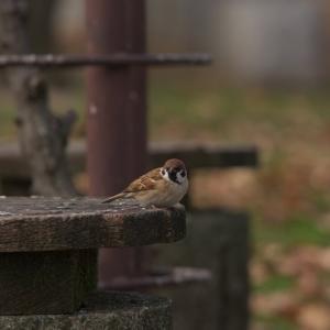 朝からカモの人(鶴見緑地・2020.12.19) その4