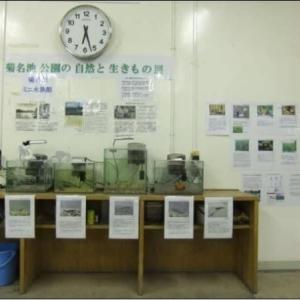 10年前の2011年7月に行なった「菊名池公園の自然と生きもの展」