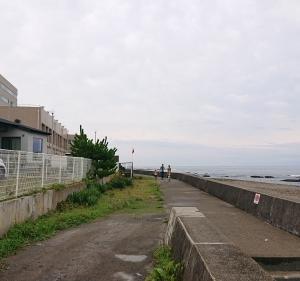 大洗海岸で貝化石発見