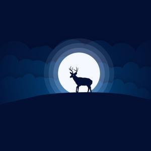 新月の日には、何か達成したい目標を決めるのにいいんでしょ(`・ω・´)?