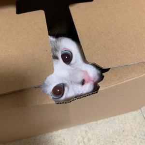 箱にはとりあえず入ります