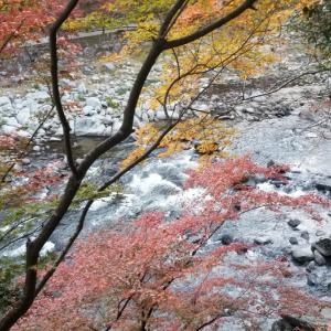 紅葉 香嵐渓