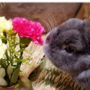 お花とくうちゃん