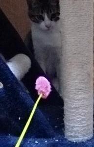 【日記】むぎ : 猫じゃらし