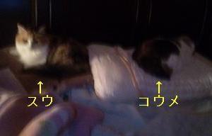 【日記】こうめvsすわん : 寝る場所