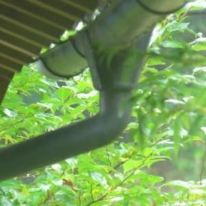 雨に備えて 樋の大掃除