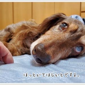 安眠妨害?!