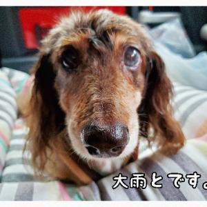 眼科検診へGo