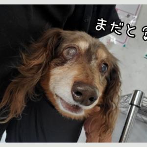 愛甲石田動物病院にて