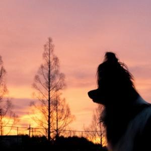 美しい朝焼け♪