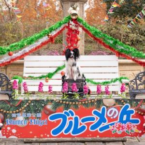【東海・関西パピヨン合同オフ会開催ご案内!】