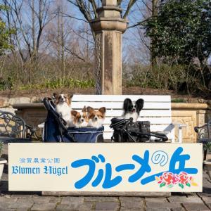 4/19の「東海・関西パピヨン合同オフ会」は決行予定!(3/22現在)
