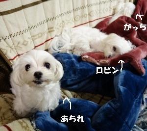 外弁慶((+_+))