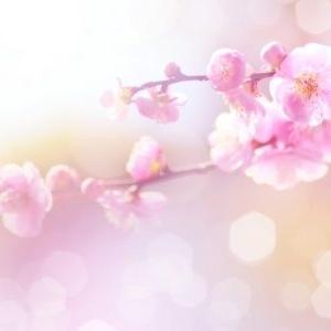 老恋呆けの春