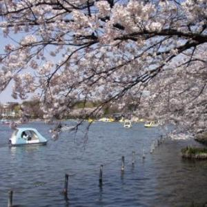 遠き春の日