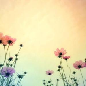 遠い日の花言葉