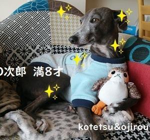 O次郎 age 8  ぴー助 age 1