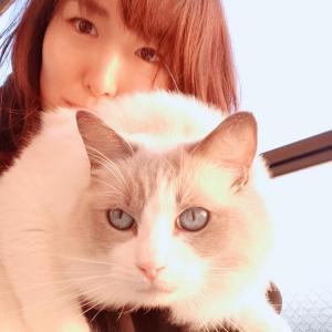 お日様と猫とホメオタシス
