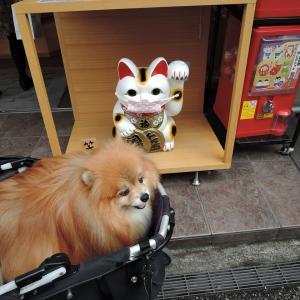 久しぶりに鎌倉へ行ってきました。