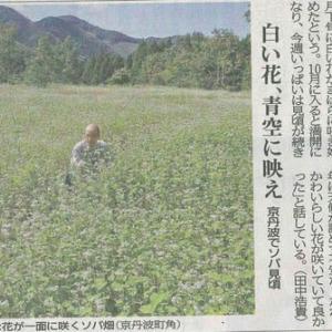 町でソバ見頃 白い花 青空に映え─京都新聞 丹波版より