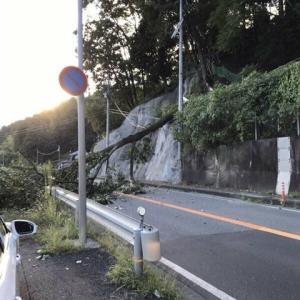 福知山の国道9号で倒木 道路ふさぎ通行止めに 電線切断し990軒停電 けが人なし─京都新聞より