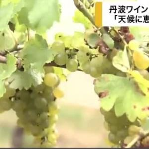 丹波ワインの新酒仕込み─カンテレNEWSより