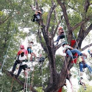 丹波自然運動公園 ロープで木登り秋風を満喫 コロナ禍でも自然楽しんで─京都新聞 丹波版より