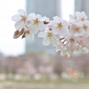 春がきた!アキラさんのテーマパーク特集! コンサート