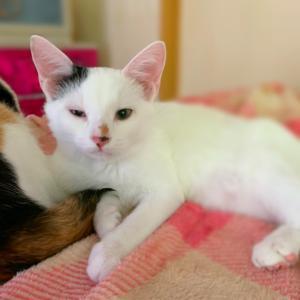 猫風邪、続行中でトライアル延期( ノД`)シクシク…