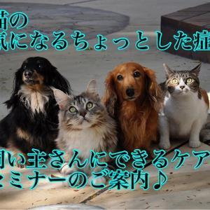 犬猫の「気になるちょっとした症状」、飼い主さんにできるケアのセミナーのご案内♪