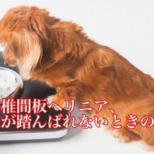 犬の椎間板ヘルニア、後肢が踏んばれないときのケア