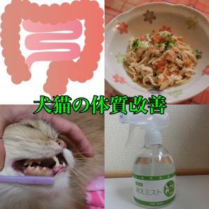 犬猫の体質改善