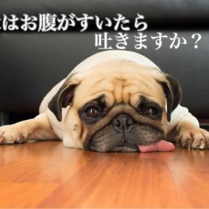 犬はお腹がすいたら吐きますか?