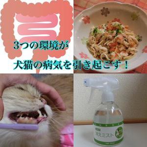 3つの環境が犬猫の病気を引き起こす!