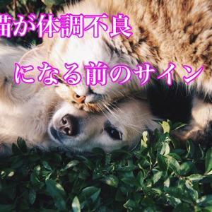 犬猫が体調不良になる前のサイン