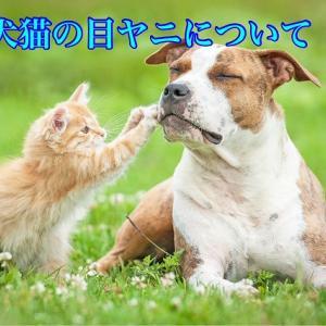 犬猫の目ヤニについて