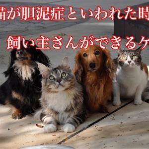 犬猫が胆泥症といわれた時に飼い主さんができるケア