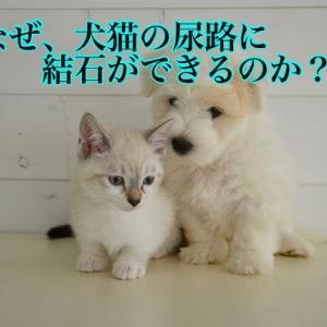 なぜ、犬猫の尿路に結石ができるのか?