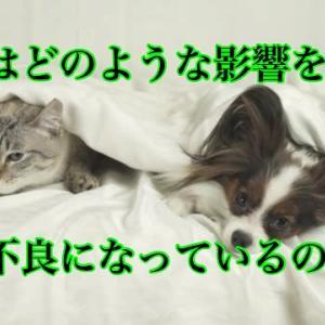 犬猫はどのような影響を受けて体調不良になっているのか?