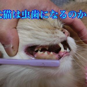 犬猫は虫歯になるの?