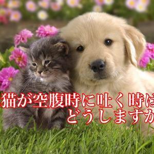 犬猫が空腹時に吐く時はどうしますか?