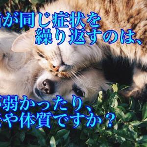 犬猫が同じ症状を繰り返すのは、体が弱かったり、遺伝や体質ですか?