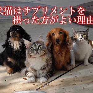 犬猫はサプリメントを摂った方がよい理由