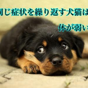 同じ症状を繰り返す犬猫は体が弱い?