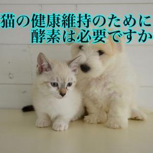 犬猫の健康維持のために酵素は必要ですか?